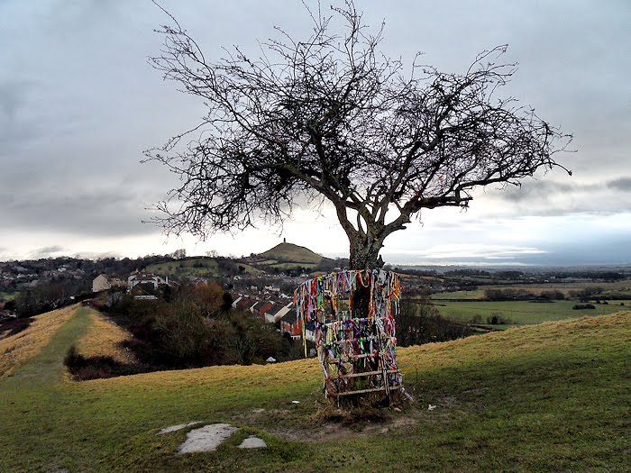 The Holy Thorn Tree At Glastonbury